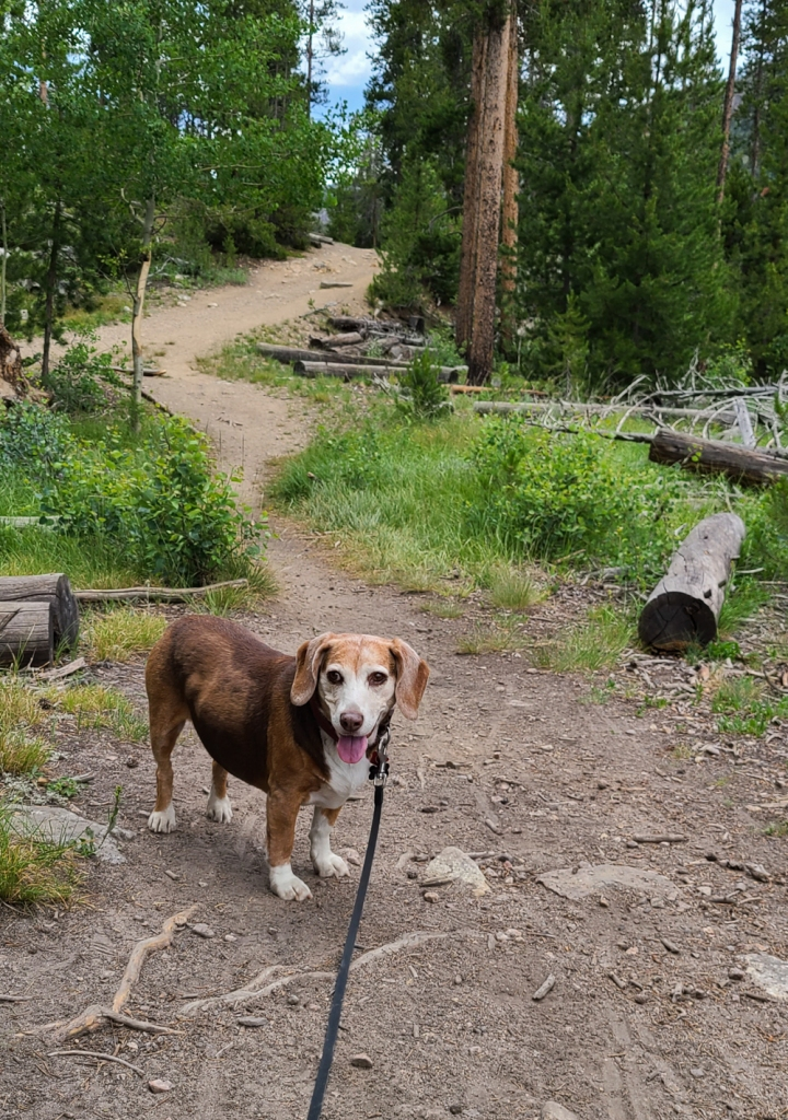 Beagle at Monarch Lake in Indian Peaks Wilderness